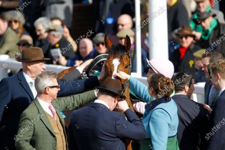 Popular horse Faugheen is greeted by owner Rich Ricci and mobbed by fans after finishing 3rd behind Samcro in the Marsh Novices' Chase at Cheltenham.