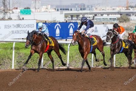 OCTALGANO (USA) ridden by Xavier Ziani wins the 8F British Embassy Dubai Maiden, race 5, at Jebel Ali, Dubai, UAE