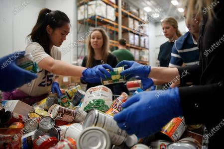 George Washington University School of Medicine students from left, Eileen Jin, Katie Coerdt, Spencer Comfort, and Jordan Martucci, sort canned food as they wear disposable gloves at Capitol Area Food Bank in Washington, . They are volunteering at the food bank because their medical rounds were cancelled because of the coronavirus outbreak