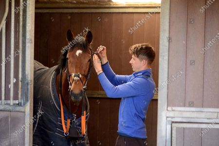 """Tommy Cooper Stables, Farmer's Bridge, Tralee, Co.Kerry. Jump jockey Bryan Cooper tacks up a 2-y-old filly by """"Bungle Inthejungle"""" for morning exercise at his father's stables during the Covid-19 Coronavirus lockdown for horse racing."""