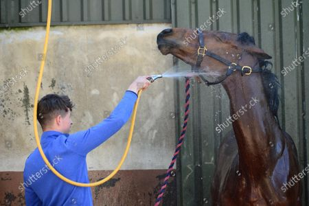 """Tommy Cooper Stables, Farmer's Bridge, Tralee, Co.Kerry. Jump jockey Bryan Cooper washing down a 2-y-old filly by """"Bungle Inthejungle"""" after morning exercise at his father's stables during the Covid-19 Coronavirus lockdown for horse racing."""