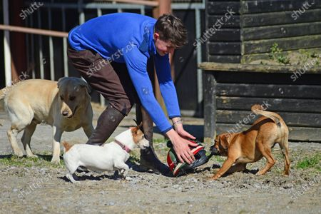 Tommy Cooper Stables, Farmer's Bridge, Tralee, Co.Kerry. Jump jockey Bryan Cooper with dogs Riley, Bailey and Sebastian at his Dad Tom's stables this morning.
