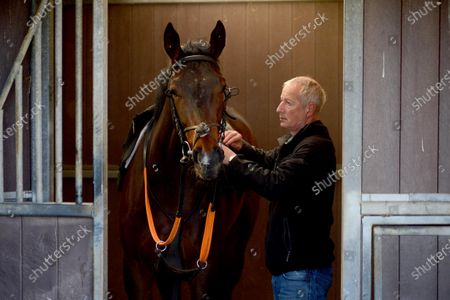 Tommy Cooper Stables, Farmer's Bridge, Tralee, Co.Kerry. Trainer Tommy Cooper tacks up a 2-y-old colt by Bated Breath for morning exercise during the Covid-19 Coronavirus lockdown for horse racing.