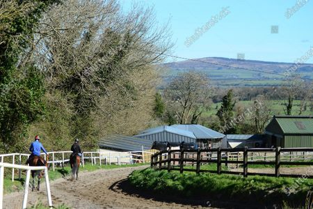 """Tommy Cooper Stables, Farmer's Bridge, Tralee, Co.Kerry. Jump jockey Bryan Cooper with Dad TOM, taking a 2-y-old filly by """"Bungle Inthejungle"""" and 2-y-old colt by """"Bated Breath"""" for morning exercise at his father's stables during the Covid-19 Coronavirus lockdown for horse racing."""