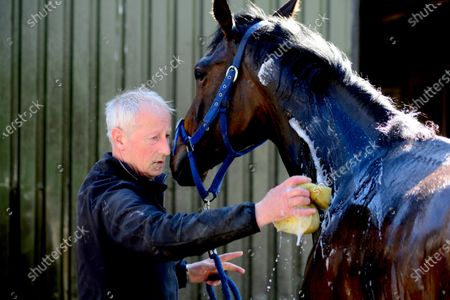 """Tommy Cooper Stables, Farmer's Bridge, Tralee, Co.Kerry. Trainer Tommy Cooper washing down his 2-y-old colt by """"Bated Breath"""" after morning exercise during the Covid-19 Coronavirus lockdown for horse racing."""