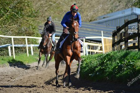"""Stock Picture of Tommy Cooper Stables, Farmer's Bridge, Tralee, Co.Kerry. Jump jockey Bryan Cooper with Dad TOM, taking a 2-y-old filly by """"Bungle Inthejungle"""" and 2-y-old colt by """"Bated Breath"""" for morning exercise at his father's stables during the Covid-19 Coronavirus lockdown for horse racing."""