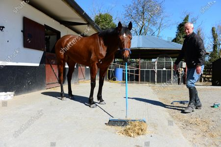 """Tommy Cooper Stables, Farmer's Bridge, Tralee, Co.Kerry. """"Lucky Phil"""" helping clean up trainer Tommy Cooper's stable yard after morning exercise during the Covid-19 Coronavirus lockdown for horse racing."""