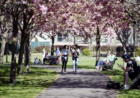 Pedestrians walk under a canopy of pink cherry blossom in Herbert Park in Dublin, Ireland, 11 April 2020. Irish Prime Minister Leo Varadkar announced a further extension to the restrictions on movment due to the coronavirus Covid-19 pandemic until 11 May 2020.