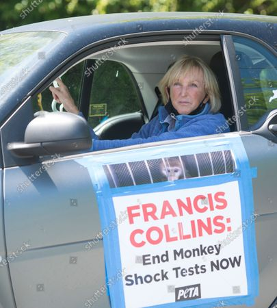 "Driving cars emblazoned with the message ""End Monkey Fright Tests!"" PETA President Ingrid Newkirk leads a caravan of PETA protesters as they circle the area, honking their horns outside the home of NIH Director Francis Collins."