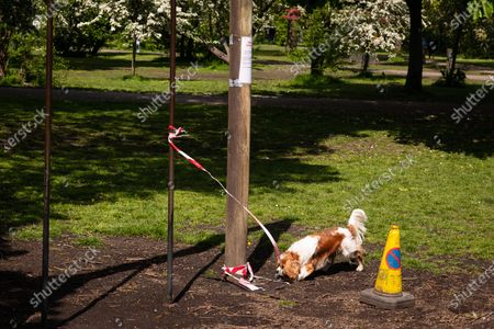 Wandsworth Common wanrning tapes on exercise equipment due to coronavirus outbreak to prevent spread of disease - and King Charles spaniel.