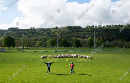 """Brecon coach Andy Powell and captain Ewan Williams with an """"NHS"""" message cut into the grass as sheep are allowed onto the pitch at Brecon rugby club to keep the grass short while COVID-19 coronavirus stops sport during the pandemic."""