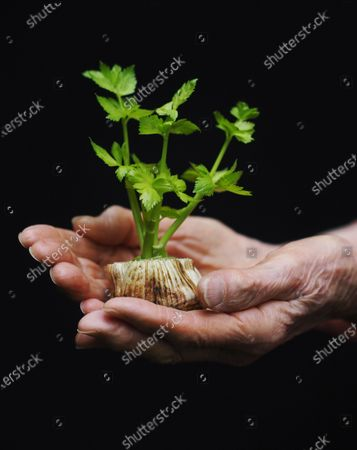 """Exclusive - Ninety-one year old Shirley Fuerst has been saving her normally discarded pieces of vegetables and regrowing them. She calls them, """"her little bonsais."""" In this photo she is holding a piece of newly sprouted celery. She says, """"It shows there is hope - even with the small things."""""""