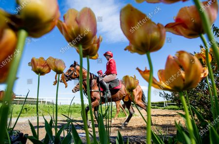 Stock Photo of Stable rider Katie Lee on Mykonos during their morning work