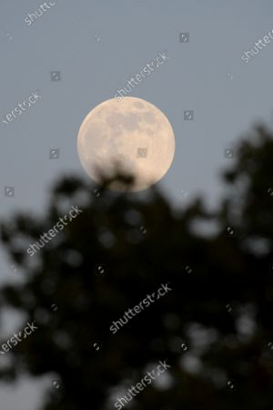 Flower Moon Stock Photos, Editorial Images and Stock Pictures ...