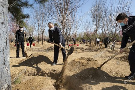(200403) -- BEIJING, April 3, 2020 (Xinhua) -- Wang Qishan plants a tree during a voluntary tree-planting activity in Daxing District in Beijing, capital of China, April 3, 2020. Chinese President Xi Jinping, also general secretary of the Communist Party of China (CPC) Central Committee and chairman of the Central Military Commission, attended a voluntary tree-planting activity here on Friday. The activity was also attended by other leaders including Li Keqiang, Li Zhanshu, Wang Yang, Wang Huning, Zhao Leji, Han Zheng and Wang Qishan.