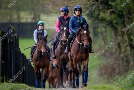 Stock Photo of Katie Walsh rides out on a two year old colt by Territories out of Miss Raven