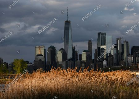 Tall grasses in a Liberty State Park marsh sway in the wind, in Jersey City, N.J