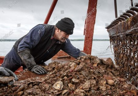 Oystermen crew of the Vital Spark, crew member John Mills checks on the quality and progress of their oysters catch in Stranraer, Scotland, Britain, 19 May 2020. Since the Covid-19 crisis all restaurants have been closed, putting their livelihoods in peril. The Loch Ryan Oyster Bed dates back to 1701, when King William III, granted a Royal Charter of the oyster bed to the Wallace family. The family live on the shores of the Loch, and the rights to the oysters bed have been in their family ever since. Loch Ryan is situated in South West Scotland, and the Loch itself is about 12Km long and 4Km wide. Scotland is still on lockdown. Stranraer, Britain, 19 May 2020.