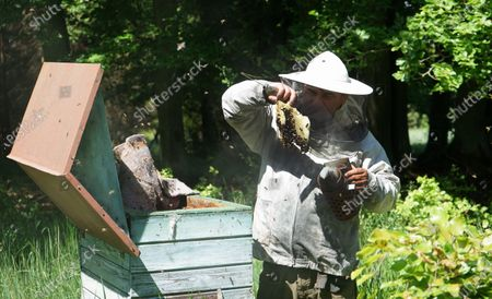 Forester Piotr Zmarzlik takes care of bees at an apiary in the Barlinek Forest District during the World Bee Day, in Niesporowice, northwestern Poland, 20 May 2020.  In 2011, the Barlinek Forest Inspectorate started a project to restore wild forest bees to the forest making five artificial beehives in pine trees and planting nectar perennials as trees and shrubs. World Bee Day is celebrated on May 20 to acknowledge the role of bees for the ecosystem.