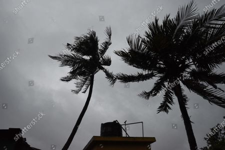 Trees sway under an overcast sky after Cyclone Amphan hit the city with heavy rain and wind during the afternoon on May 20, 2020 in Kolkata, India. Super Cyclone Amphan made landfall at 2.30 pm. Over five lakh people have been evacuated in West Bengal while over 1.58 lakh have been taken to safety in Odisha.