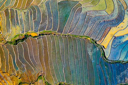 Editorial image of Colourful rice fields, Vietnam - 20 May 2020