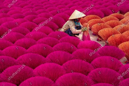Stock Image of Bunches of incense sticks create a beautiful display of colour as they are laid out to dry.  A worker carefully laid out dozens of the vibrant bundles on the ground closely together.  Aerial shots of the incense factory in Quang Phu Cau, Hanoi, Vietnam, show the sticks creating a sea of red and brown.