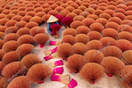 Stock Photo of Bunches of incense sticks create a beautiful display of colour as they are laid out to dry.  A worker carefully laid out dozens of the vibrant bundles on the ground closely together.  Aerial shots of the incense factory in Quang Phu Cau, Hanoi, Vietnam, show the sticks creating a sea of red and brown.