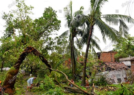 A poor family trying to remove a broken tree from their house during the aftermath. Cyclone Amphan has hit west Bengal with a speed of 150 Km/ hr. which caused huge destruction of lively hood and 76 deaths have been reported so far.