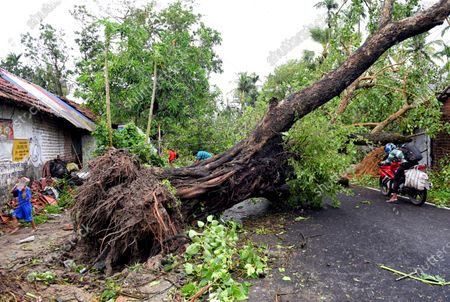 A huge uprooted tree laying on the ground across the road during the aftermath. Cyclone Amphan has hit west Bengal with a speed of 150 Km/ hr. which caused huge destruction of lively hood and 76 deaths have been reported so far.