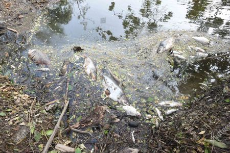 Dead fish after saline water was brought upstream due to Cyclone Amphan, at Kakdwip in the Sunderbans, South 24 Parganas district, on May 22, 2020 in Kakdwip, India.