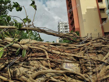 Editorial photo of Devastating Kolkata due to Amphan, India - 23 May 2020