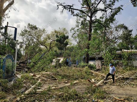 Stock Picture of Cyclone Amphan has made Kolkata into a jungle, every trees are fallen on the ground, there is no electricity and network at many places in Kolkata.