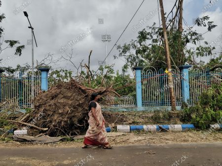 Stock Photo of Cyclone Amphan has made Kolkata into a jungle, every trees are fallen on the ground, there is no electricity and network at many places in Kolkata.