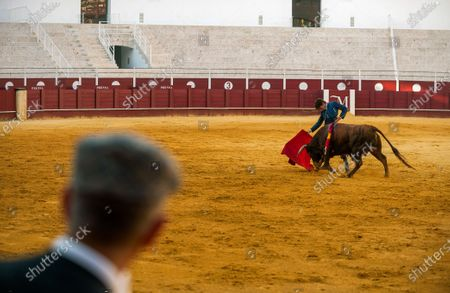 Stock Image of Spanish bullfighter Fernando Rey performs with a steer during a masterclass of bullfighting at an empty La Malagueta bullring as partial lockdown continues in the country amid coronavirus disease.Spanish bullfighter Fernando Rey has given a masterclass with students of the bullfighting school without the presence of spectators as a measure to prevent the spread of coronavirus. This situation shows an empty bullring and being the first bullfighting event in the city since they started the emergency state.