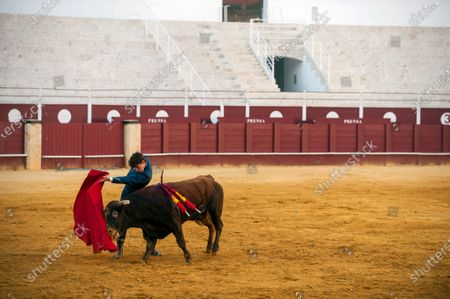 Stock Picture of Spanish bullfighter Fernando Rey performs with a steer during a masterclass of bullfighting at an empty La Malagueta bullring as partial lockdown continues in the country amid coronavirus disease.Spanish bullfighter Fernando Rey has given a masterclass with students of the bullfighting school without the presence of spectators as a measure to prevent the spread of coronavirus. This situation shows an empty bullring and being the first bullfighting event in the city since they started the emergency state.