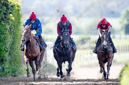 Scott McCullagh on Dubai Romance, Shane Foley on Grizzly and Tom Madden on Wombat as Jessica Harrington's houses prepare for the resumption of racing on June 8th
