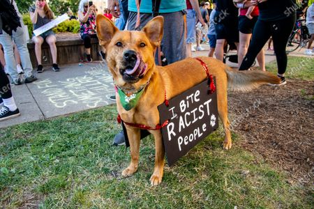 A dog with a protest sign is seen as protestors gather in solidarity following demonstrations around the world against police brutality and racial injustice sparked by the death of George Floyd and Breonna Taylor. Breonna Taylor was fatally shot by police on March 13th and would have celebrated her birthday this weekend on June, 07, 2020 in Louisville, Kentucky.
