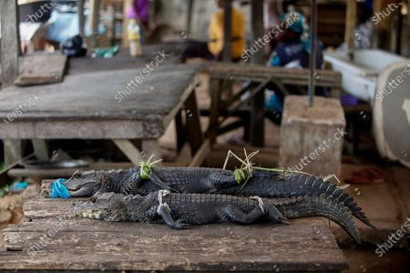Captured live Alligators are displayed for sale at a wet market in Lagos, Nigeria, 09 June 2020 (issued 12 June 2020). For centuries across West Africa wildlife has been traded for food in the culturally accepted business of bushmeat sales. For many families in rural areas this old tradition of hunting and selling bushmeat is their single means of income. The World Animal Protection is calling for a stop on all wildlife trade. The charity is driving a campaign to support a global trade ban for wildlife at the G20 meeting of world leaders in November to protect wildlife and help prevent future zoonotic pandemics. According to World Animal Protection wild animals captured from their natural habitat or bred in captivity are typically placed in cramped cages and unhygenic conditions causing suffering and creating a lethal hotbed of disease. This can harm humans when coming into contact with them as occurred with Covid-19.