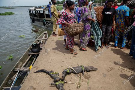 Captured live Alligators are brought ashore to a wet market in Lagos, Nigeria, 09 June 2020 (issued 12 June 2020). For centuries across West Africa wildlife has been traded for food in the culturally accepted business of bushmeat sales. For many families in rural areas this old tradition of hunting and selling bushmeat is their single means of income. The World Animal Protection is calling for a stop on all wildlife trade. The charity is driving a campaign to support a global trade ban for wildlife at the G20 meeting of world leaders in November to protect wildlife and help prevent future zoonotic pandemics. According to World Animal Protection wild animals captured from their natural habitat or bred in captivity are typically placed in cramped cages and unhygenic conditions causing suffering and creating a lethal hotbed of disease. This can harm humans when coming into contact with them as occurred with Covid-19.