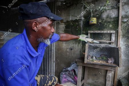 An Ivorian man feeds rats he raises in captivity for human consumption in N'ziaounouan outside Abidjan, Ivory Coast, 10 June 2020 (issued 12 June 2020). For centuries across West Africa wildlife has been traded for food in the culturally accepted business of bushmeat sales. For many families in rural areas this old tradition of hunting and selling bushmeat is their single means of income. The World Animal Protection is calling for a stop on all wildlife trade. The charity is driving a campaign to support a global trade ban for wildlife at the G20 meeting of world leaders in November to protect wildlife and help prevent future zoonotic pandemics. According to World Animal Protection wild animals captured from their natural habitat or bred in captivity are typically placed in cramped cages and unhygenic conditions causing suffering and creating a lethal hotbed of disease. This can harm humans when coming into contact with them as occurred with Covid-19.