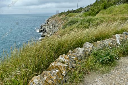 Wild grasses sway in the gentle coastal breeze by Durlston Head