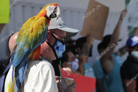"""Stock Image of Ed Keeler and his parrot Tabu participate in a """"Right to Work"""" rally outside of the Elbo Room bar, which remains closed during the coronavirus pandemic, in Fort Lauderdale, Fla. Across Florida, bars were part of the Phase 2 re-openings that occurred earlier in June, except in three counties in South Florida"""