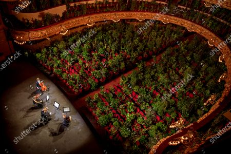 """Musicians rehearse at the Gran Teatre del Liceu in Barcelona, Spain, . The Gran Teatre del Liceu reopens its doors, in which the 2,292 seats of the auditorium will be occupied on this occasion by plants. It will be on 22 June, broadcast live online, when the UceLi Quartet string quartet performs Puccini's """"Crisantemi"""" for this verdant public, brought in from local nurseries"""