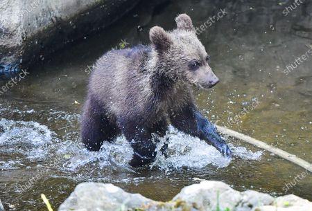 Editorial image of Bears at Skansen zoo in Stockholm, Sweden - 25 Jun 2020