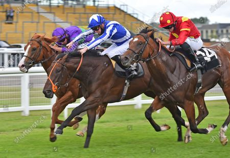 (L) Cairn Gorm (Tom Marquand) wins The Oakley Coachbuilders EBF Novice Auction Stakes from (C) Dandys Derriere (Jason Watson) and (R) Nelson Gay (Ryan Moore).