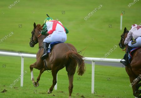Ballinrobe RAMBLING ROSE and Patrick Mullins win the Tim Kelly Group Mares Flat Race. Healy Racing