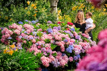 Katie McCarron and son George Petch, 18 months, from Bromley pictured admiring the stunning hydrangeas on Battleston Hill at RHS Garden Wisley