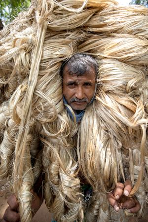 Workers appear to be wearing large golden wigs as they carry a heavy bundle of jute fibre. Their bodies are enveloped with the heavy natural fibres, with only their faces visible as they each carry around 50kg of jute on their shoulders.  The unusual images were captured by photographer Azim Khan Ronnie in Manikganj, Bangladesh.