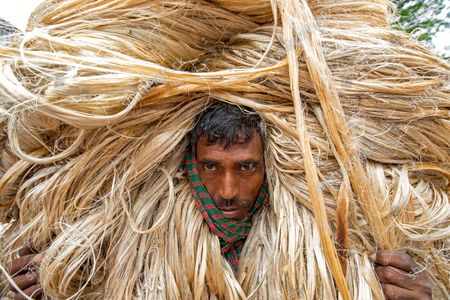 Editorial picture of Bundles of jute fibre, Manikganj, Bangladesh - 22 Jul 2020