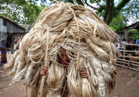Stock Picture of Workers appear to be wearing large golden wigs as they carry a heavy bundle of jute fibre. Their bodies are enveloped with the heavy natural fibres, with only their faces visible as they each carry around 50kg of jute on their shoulders.  The unusual images were captured by photographer Azim Khan Ronnie in Manikganj, Bangladesh.